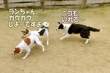 CIMG0727.jpg