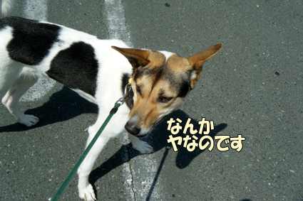DSCF0119.jpg