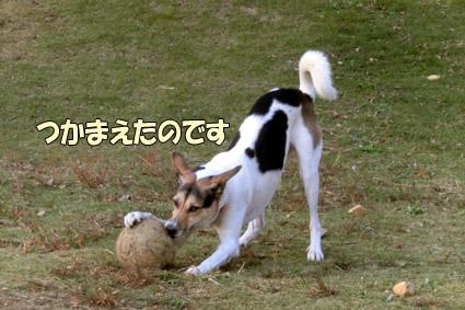 CIMG0143.jpg